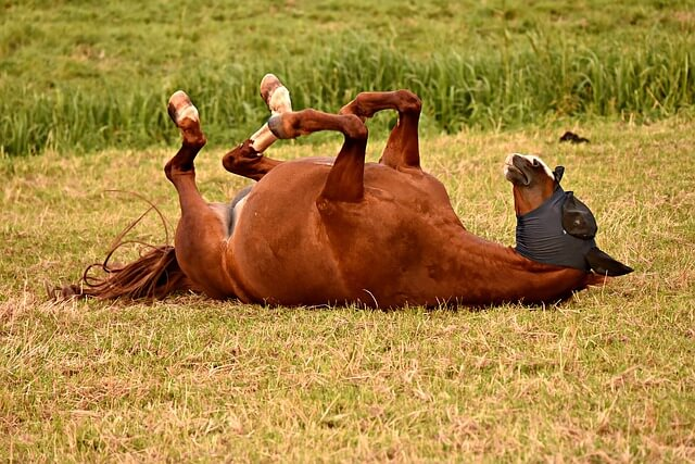 horse-3602261_640